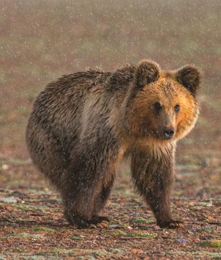 玉树州可可西里野生动植物保护协会公告