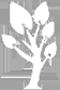 可可西里珍稀植物物种