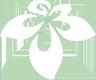 国家重点保护野生植物